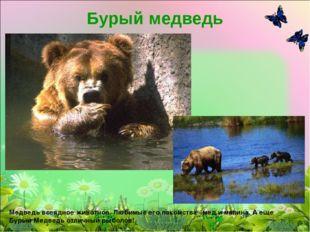 Бурый медведь Медведь всеядное животное. Любимые его лакомства - мед и малина