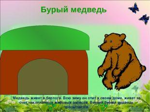 Бурый медведь Медведь живет в берлоге. Всю зиму он спит в своем доме, живет з