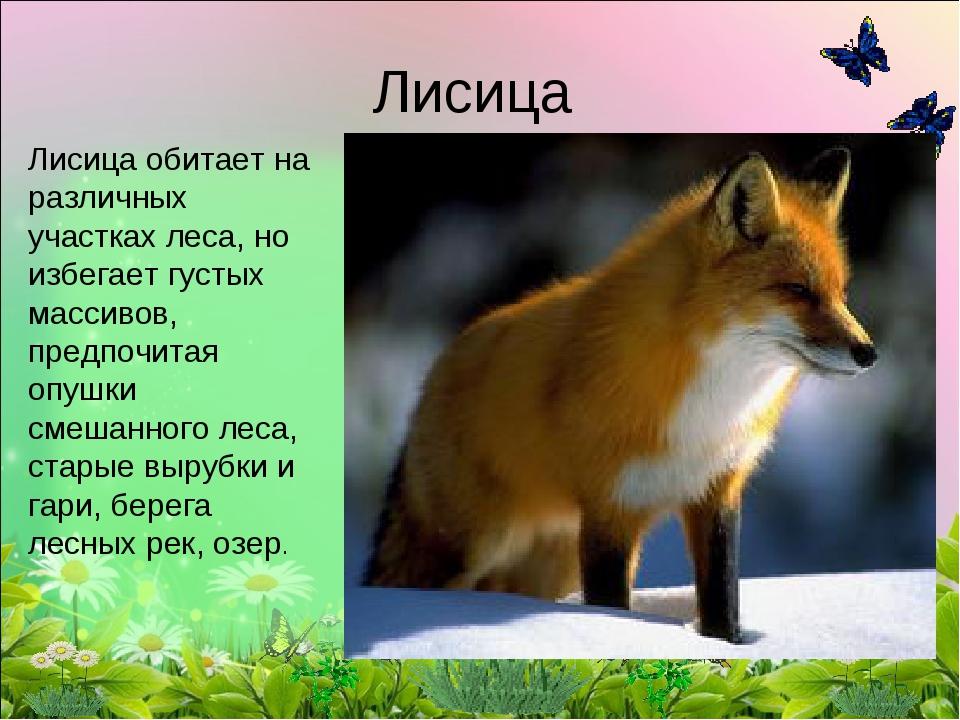Лисица Лисица обитает на различных участках леса, но избегает густых массивов...