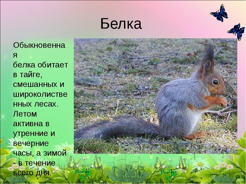 Белка Обыкновенная белкаобитает в тайге, смешанных и широколиственных лесах....