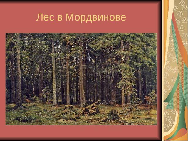 Лес в Мордвинове