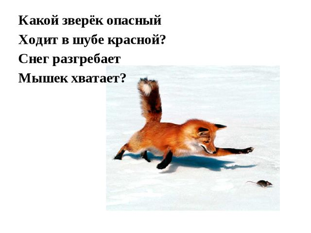 Какой зверёк опасный Ходит в шубе красной? Снег разгребает Мышек хватает?