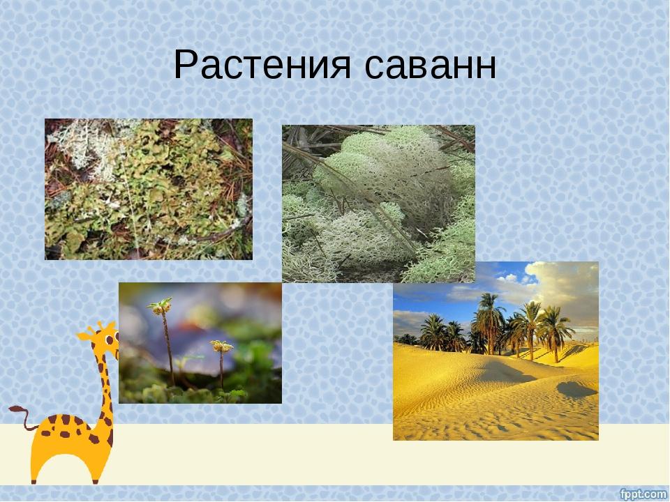 Растения саванн