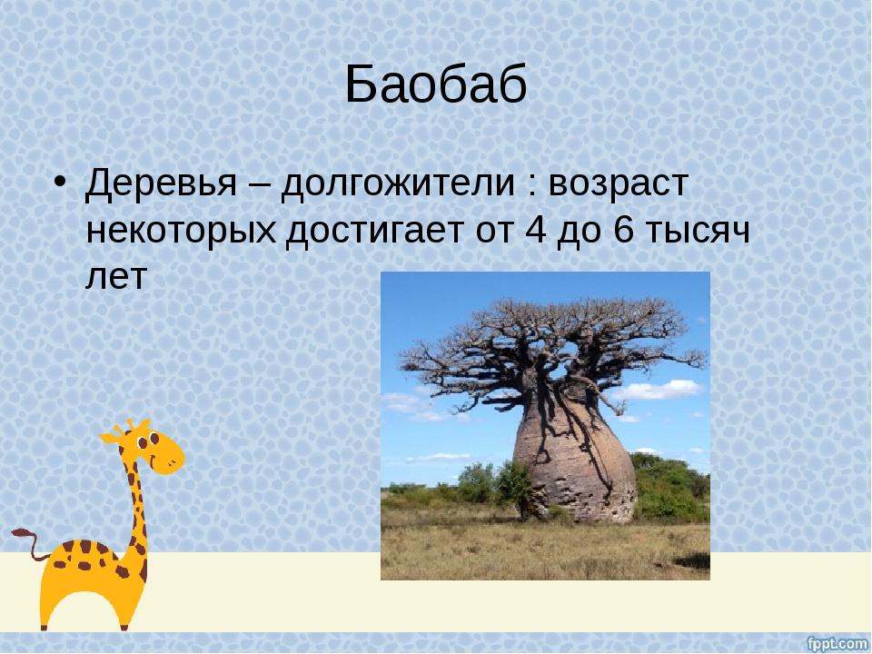 Баобаб Деревья – долгожители : возраст некоторых достигает от 4 до 6 тысяч лет
