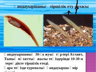 Қандауыршаның тіршілік ету ортасы Қандауыршаның 30-ға жуық түрлері Атлант, Ты