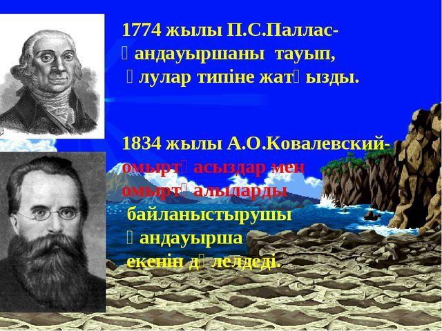 1774 жылы П.С.Паллас-қандауыршаны тауып, ұлулар типіне жатқызды. 1834 жылы А....