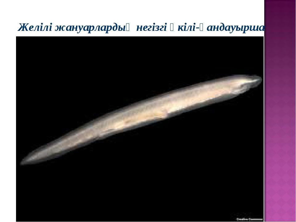 Желілі жануарлардың негізгі өкілі-қандауырша