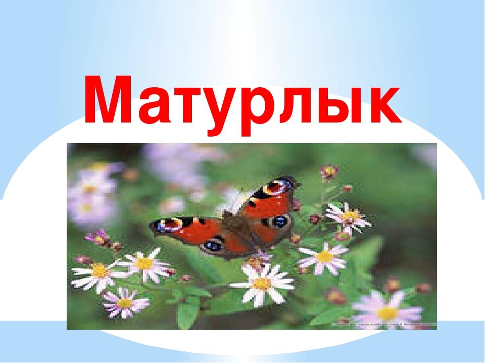 Матурлык