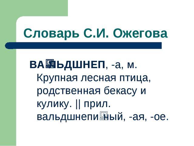 Словарь С.И. Ожегова ВАЛЬДШНЕП, -а, м. Крупная лесная птица, родственная бе...