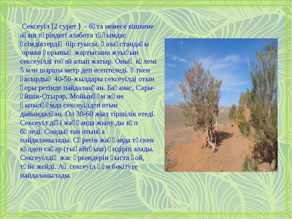 Сексеуіл [2 cурет ] - бұта немесе кішкене ағаш түріндегі алабота тұқымдас ө...