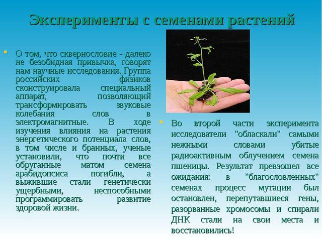 Эксперименты с семенами растений О том, что сквернословие - далеко не безобид...