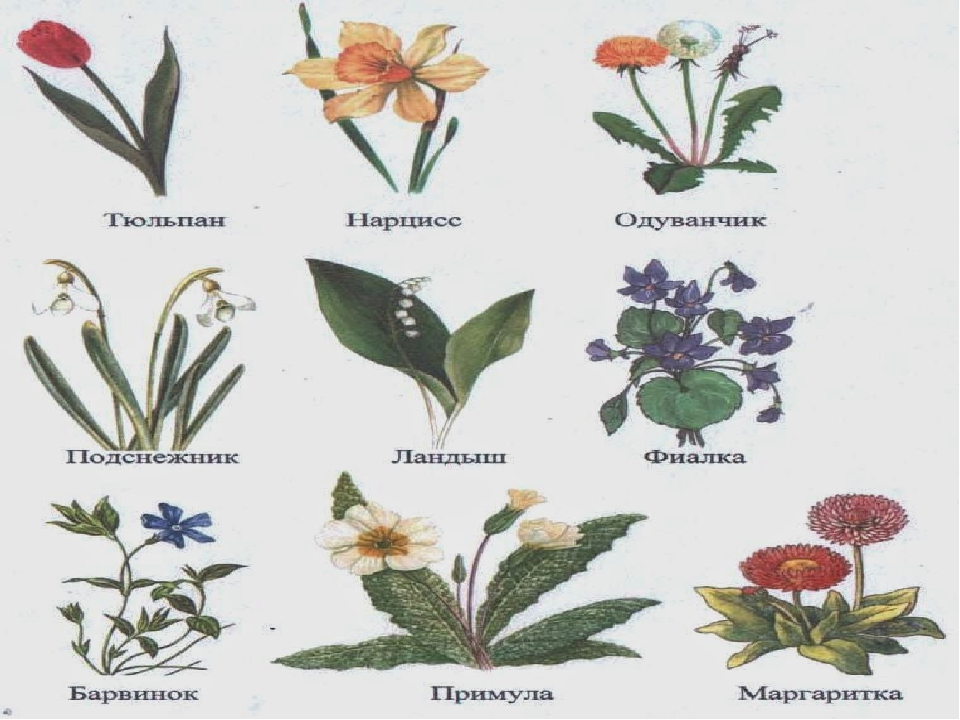 Все виды цветов в картинках с названиями уличные