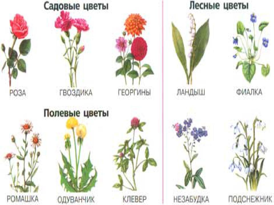Полевые цветы и кустарники