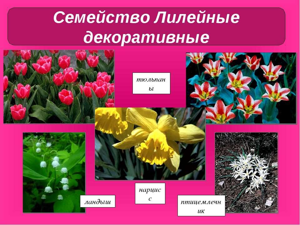 hello_html_m146e58f9.jpg