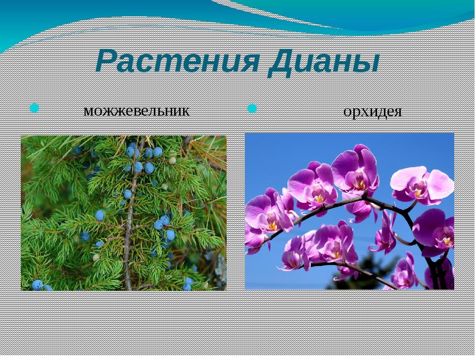 Растения Дианы можжевельник орхидея