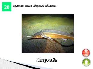 10 Реки и озера. Волга Она является одной из крупнейших рек на Земле и самой