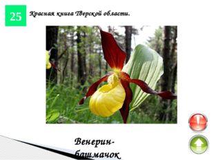 15 Реки и озера. Тверца Река в Тверской области, левый приток Волги, с древн