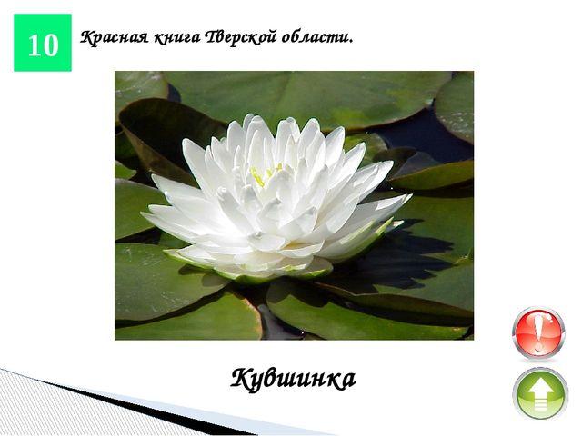 25 Красная книга Тверской области. Венерин-башмачок