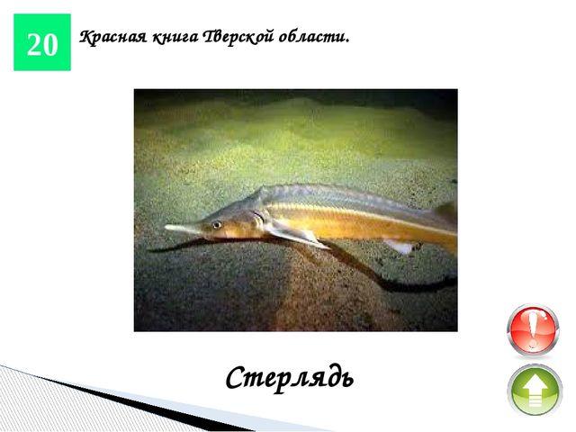 10 Реки и озера. Волга Она является одной из крупнейших рек на Земле и самой...