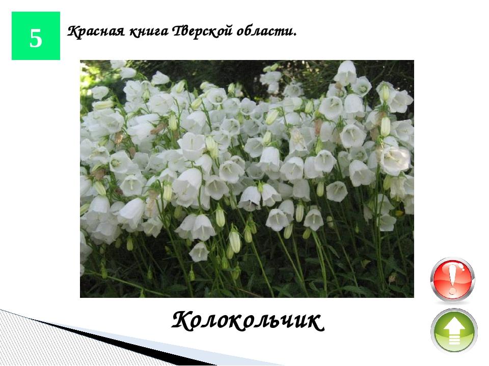 20 Красная книга Тверской области. Стерлядь