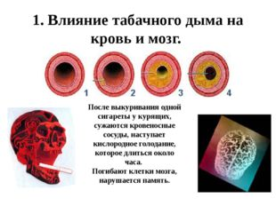 1. Влияние табачного дыма на кровь и мозг. После выкуривания одной сигареты у