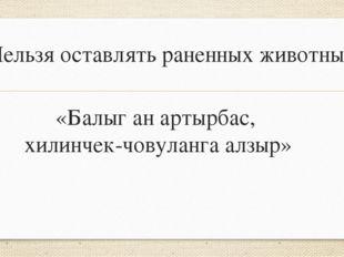 «Балыг ан артырбас, хилинчек-човуланга алзыр» Нельзя оставлять раненных живот