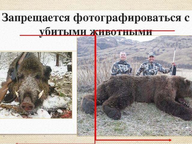 Запрещается фотографироваться с убитыми животными