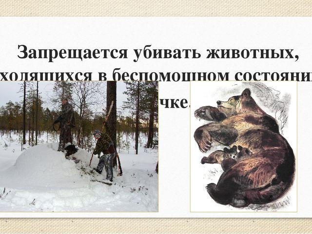Запрещается убивать животных, находящихся в беспомощном состоянии и в спячке.