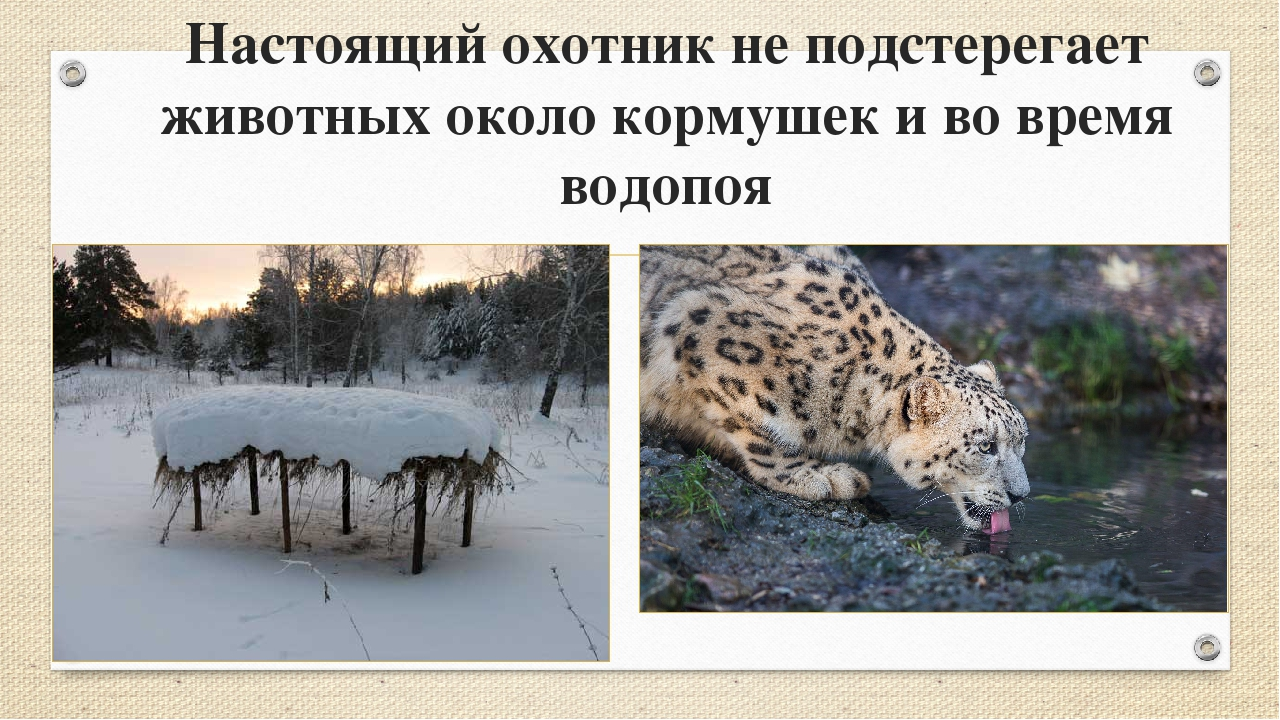 Настоящий охотник не подстерегает животных около кормушек и во время водопоя