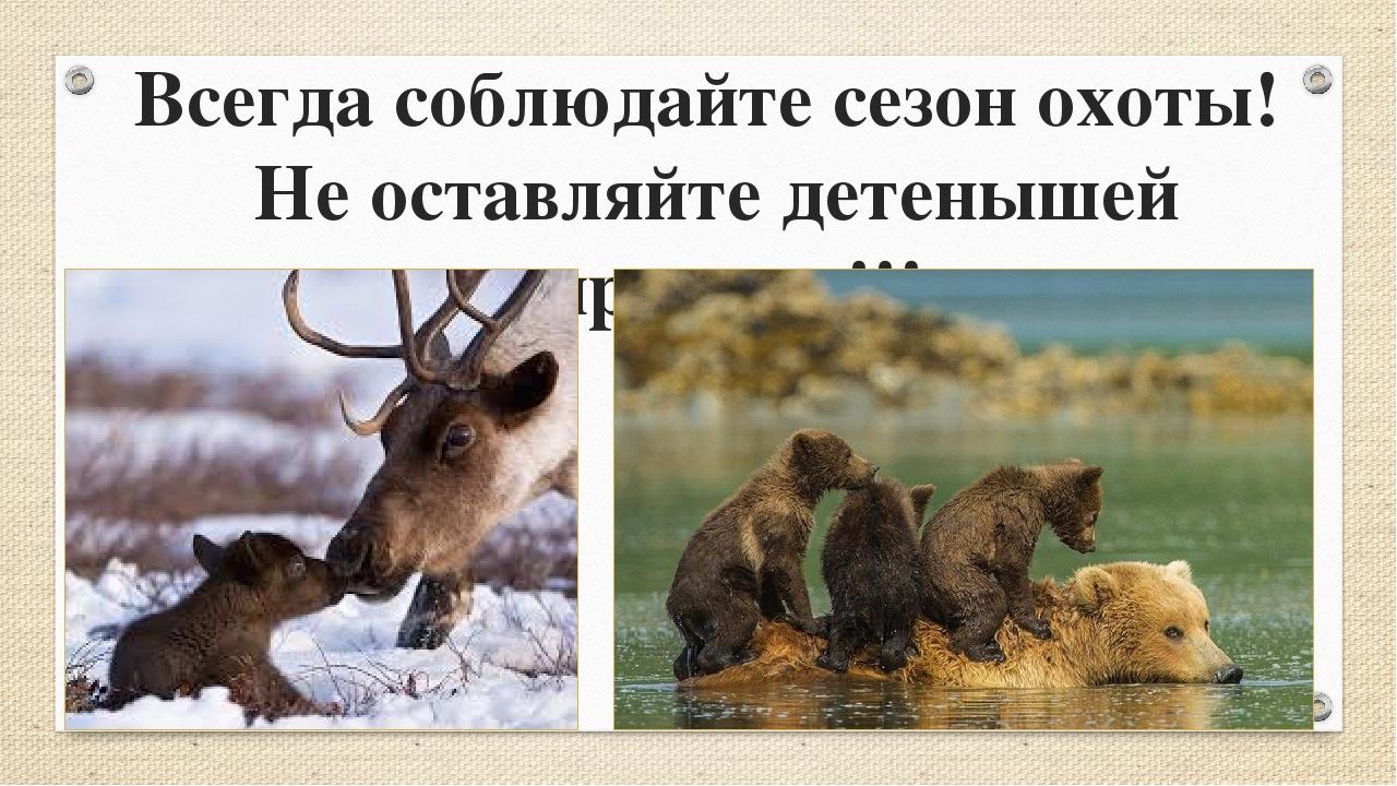 Всегда соблюдайте сезон охоты! Не оставляйте детенышей сиротами!!!