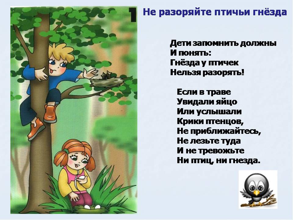 Поведение в лесу стих