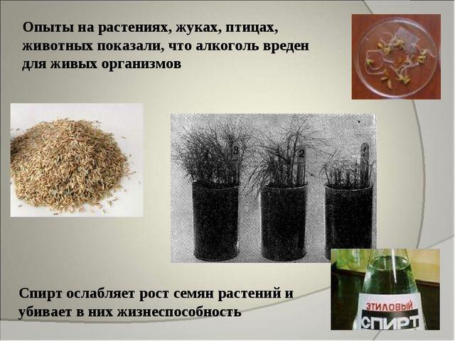Опыты на растениях, жуках, птицах, животных показали, что алкоголь вреден для...