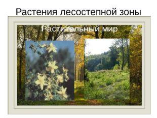 Растения лесостепной зоны