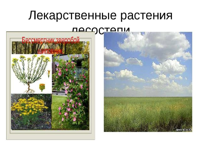 Лекарственные растения лесостепи