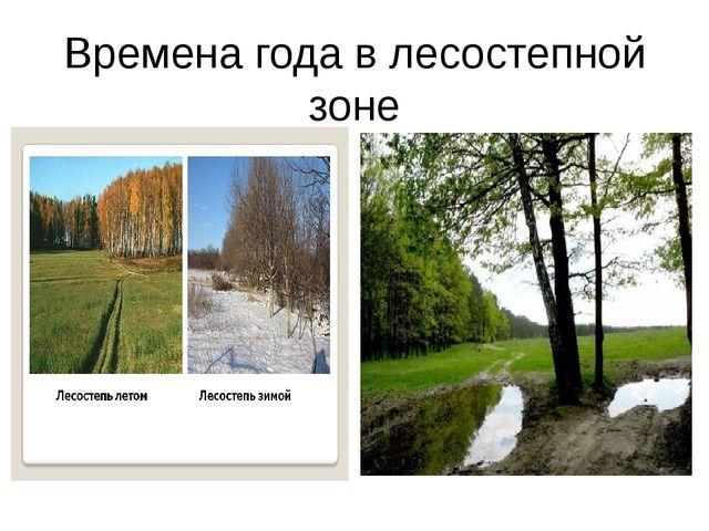 Времена года в лесостепной зоне
