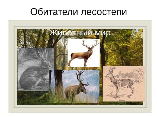 Обитатели лесостепи