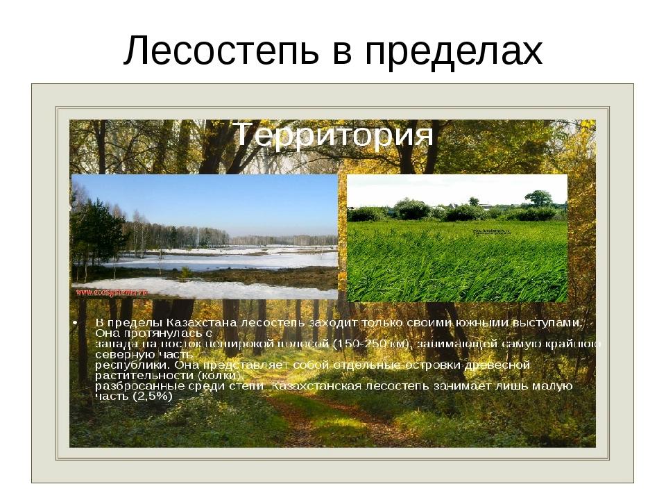 Лесостепь в пределах Казахстана