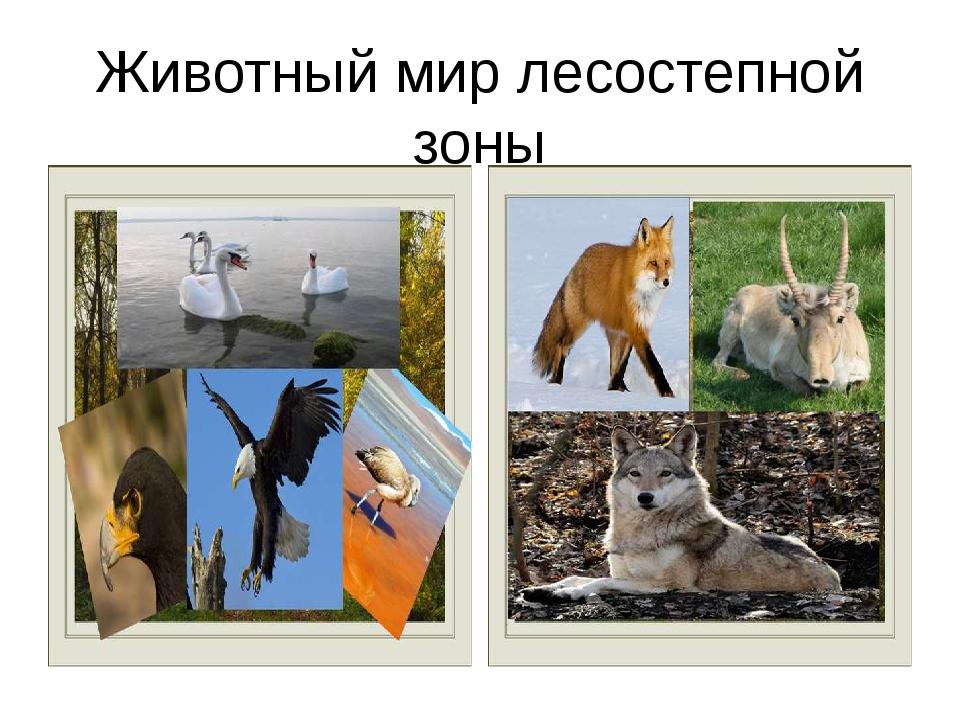 Животный мир лесостепной зоны