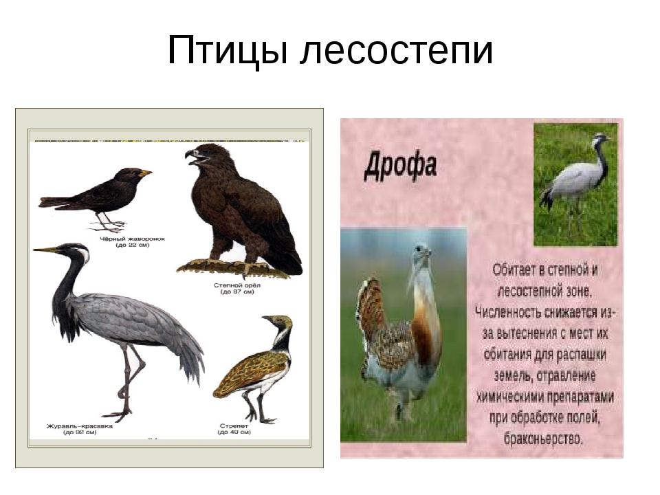 Птицы лесостепи