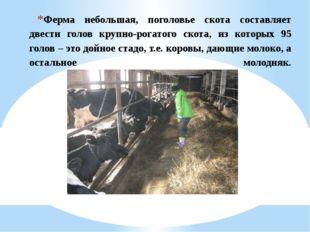 Ферма небольшая, поголовье скота составляет двести голов крупно-рогатого скот