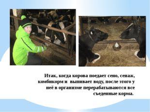 Итак, когда корова поедает сено, сенаж, комбикорм и выпивает воду, после этог
