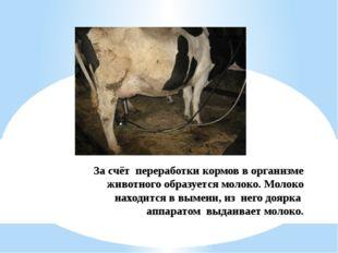За счёт переработки кормов в организме животного образуется молоко. Молоко на