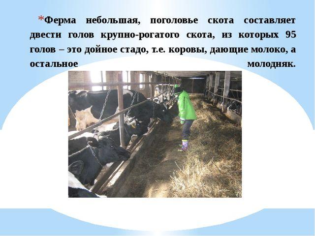 Ферма небольшая, поголовье скота составляет двести голов крупно-рогатого скот...