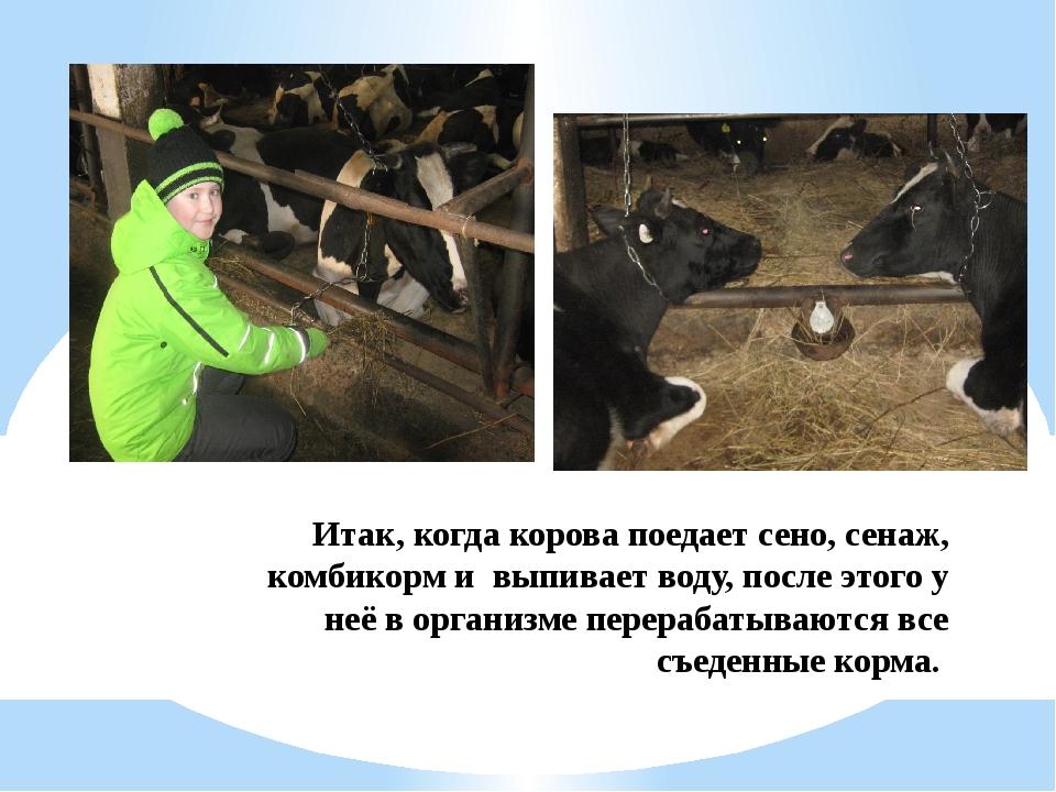 Итак, когда корова поедает сено, сенаж, комбикорм и выпивает воду, после этог...