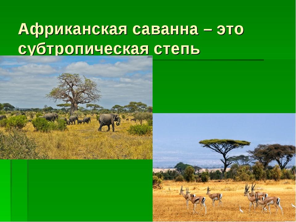Африканская саванна – это субтропическая степь