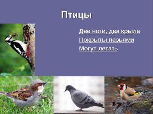 Птицы Две ноги, два крыла Покрыты перьями Могут летать