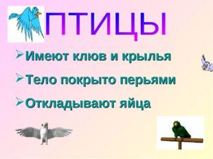 Имеют клюв и крылья Тело покрыто перьями Откладывают яйца