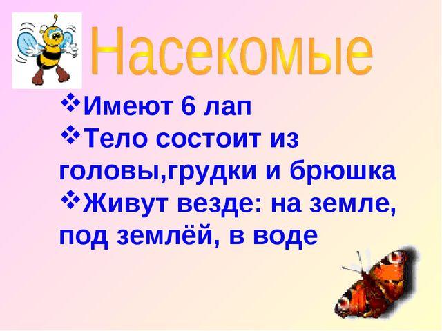 Имеют 6 лап Тело состоит из головы,грудки и брюшка Живут везде: на земле, под...