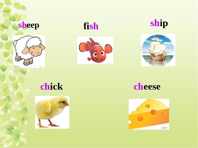 sheep fish ship chick cheese