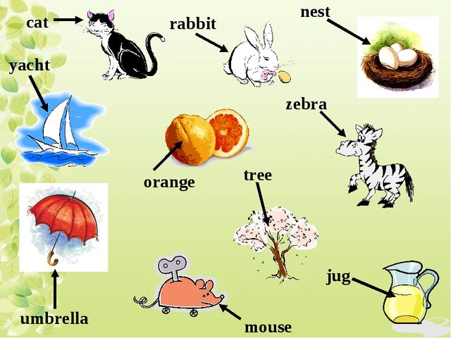 cat rabbit umbrella orange mouse tree yacht nest zebra jug